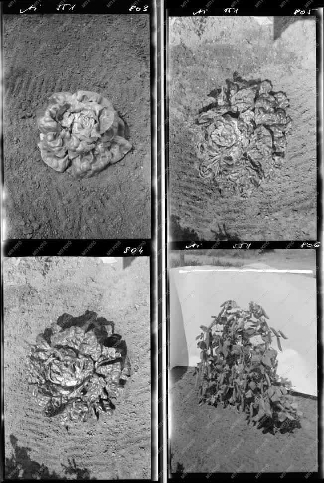 Mezőgazdaság - Növénytermesztés - Agrimpex album