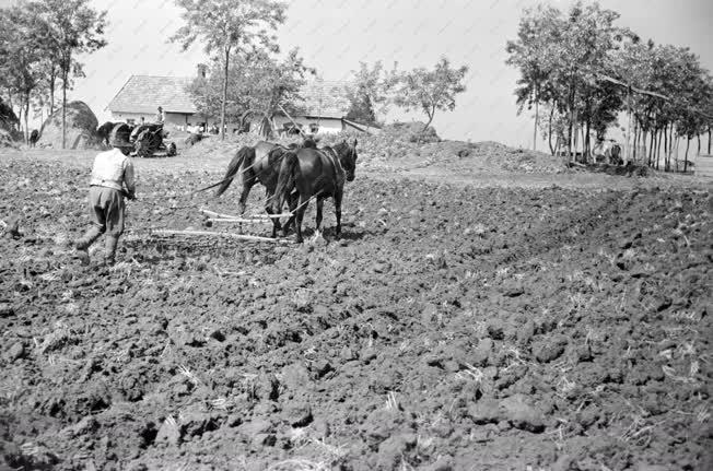 Mezőgazdaság - Szántás-boronálás