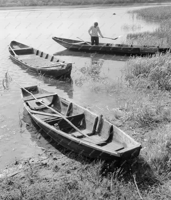 Mezőgazdaság - A paksi Halászati Tsz tógazdasága