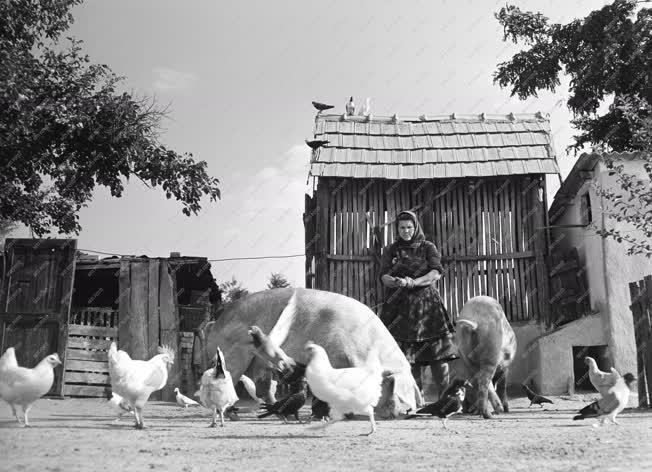 Életkép - Élet a kiskunsági tanyán
