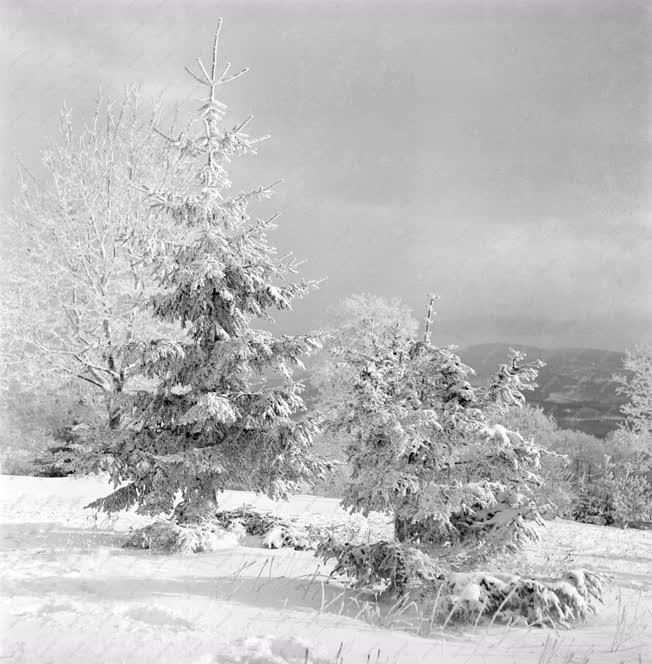 Természet - Galyatető téli látképe