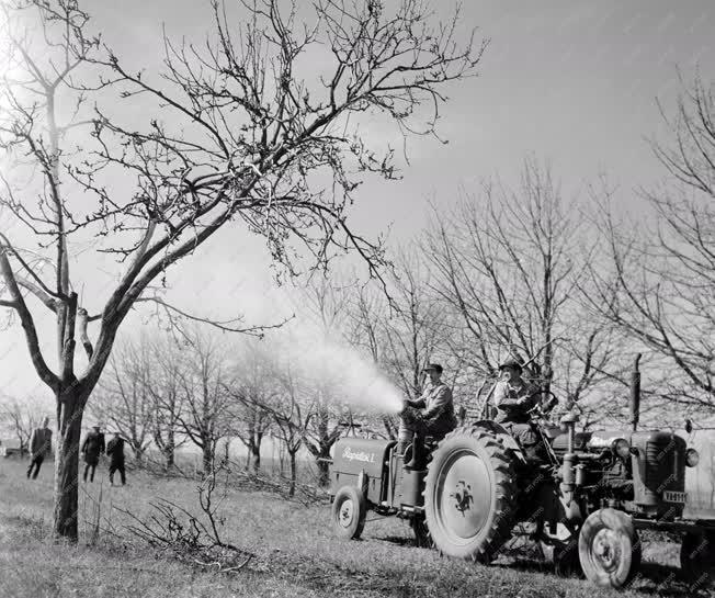 Mezőgazdaság - Vörös Hajnal Termelőszövetkezet