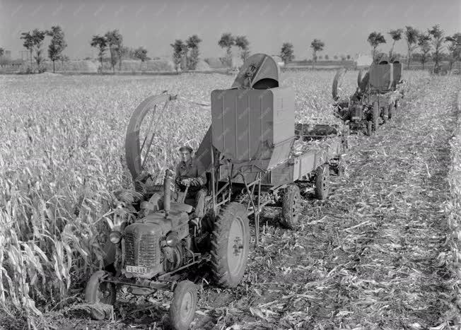 Mezőgazdaság - Hidasháti Állami Gazdaság