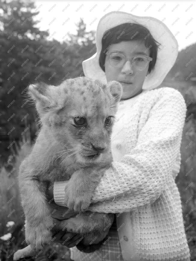 Állatkert - Gazdagodott a veszprémi állatkert