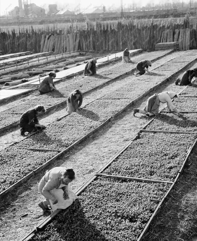 Mezőgazdaság - A dombóvári Alkotmány Termelőszövetkezet