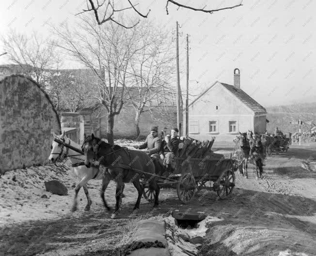 Mezőgazdaság - A lovasi Új Élet Tsz