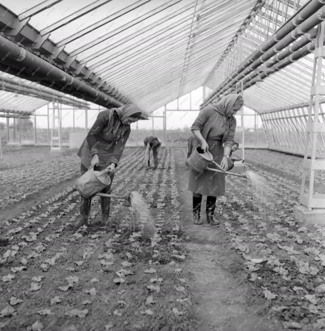Mezőgazdaság - Növénytermesztés