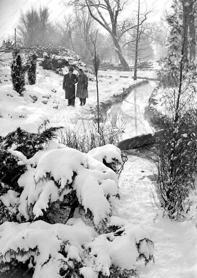 Természet-környezet - Tél a Margit-szigeten