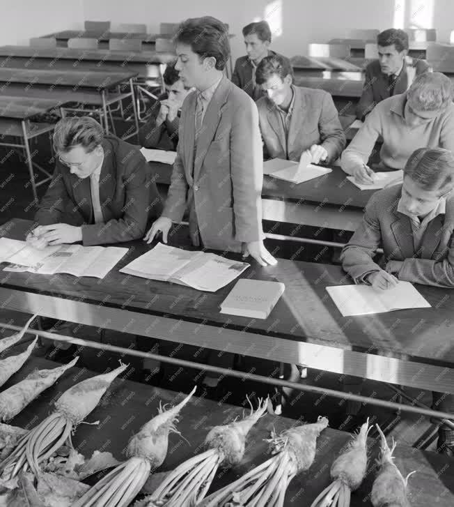 Oktatás - A Székesfehérvári Felsőfokú Mezőgazdasági Technikum