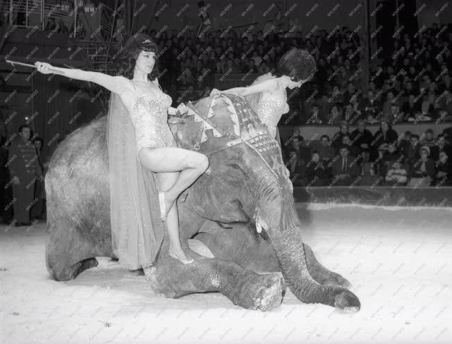 Kultúra - A Zamperla testvérek elefántszáma a cirkuszban