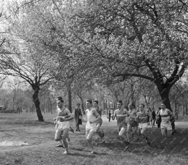 Sport - Országos mezei futóbajnokság a Népligetben