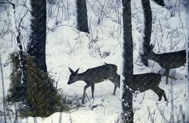 Tájkép - Állatvilág - Gemenci erdő