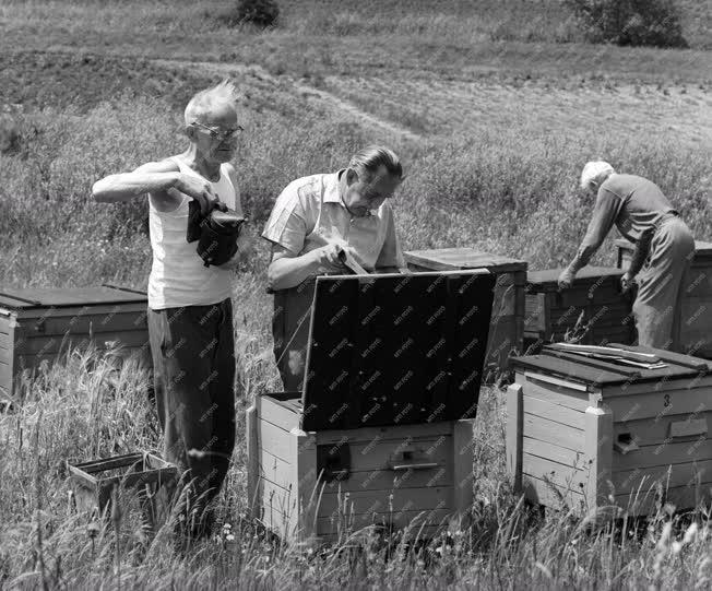 Mezőgazdaság - Méhészet - Vándorméhészek a Pilisben