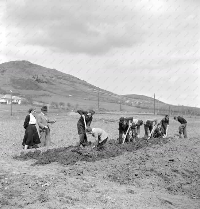 Oktatás - Mezőgazdaság - Szakmai képzés a tangazdaságban