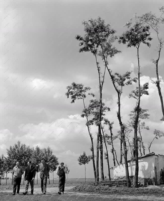 Mezőgazdaság - Szakemberek segítik a tsz-eket