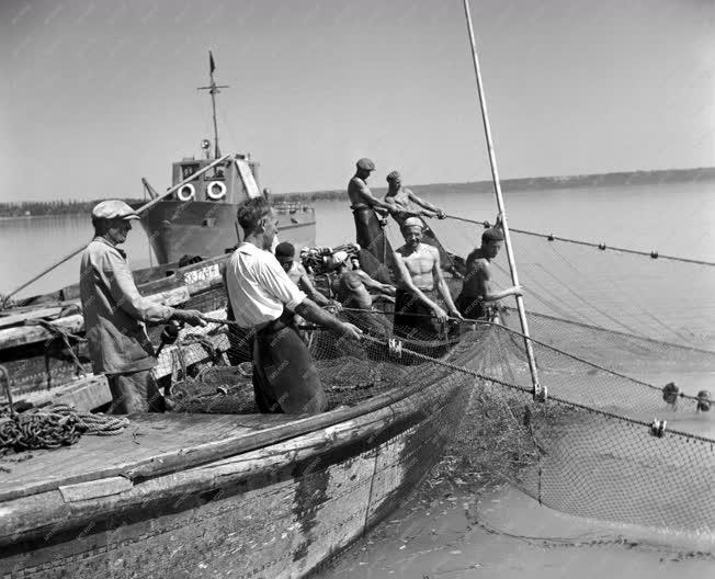 Mezőgazdaság - Motoros halászat a Balatonon