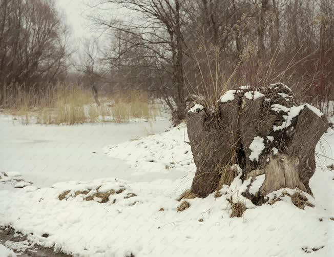Tájkép - Téli táj