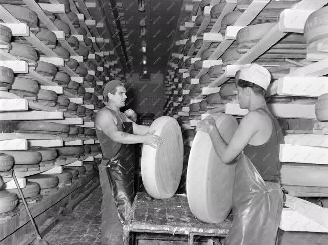 Élelmiszeripar - Sajtgyártás
