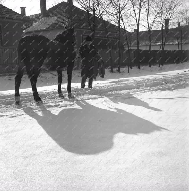 Falusi hétköznapok - A balmazújvárosi gyepsor télen