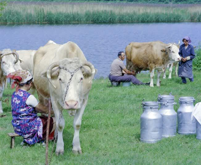 Mezőgazdaság - Tímár Sándor egyéni gazda