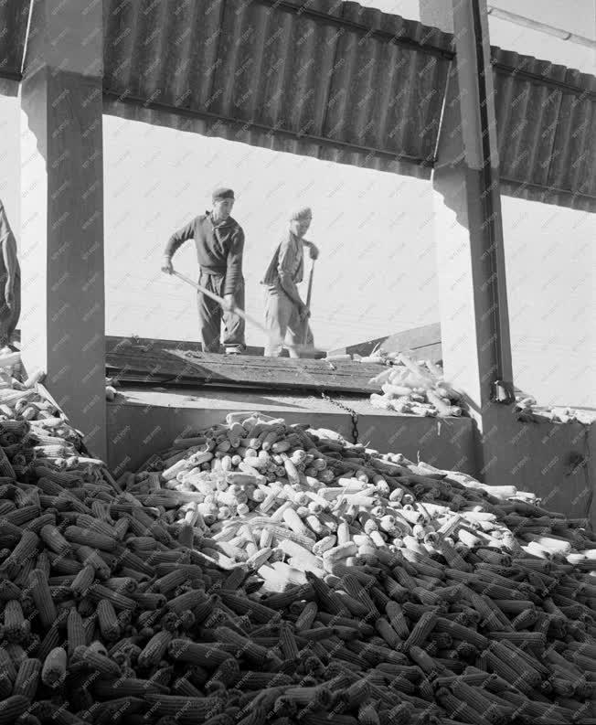 Mezőgazdaság -  Hibridkukorica üzem kukorica tárolója
