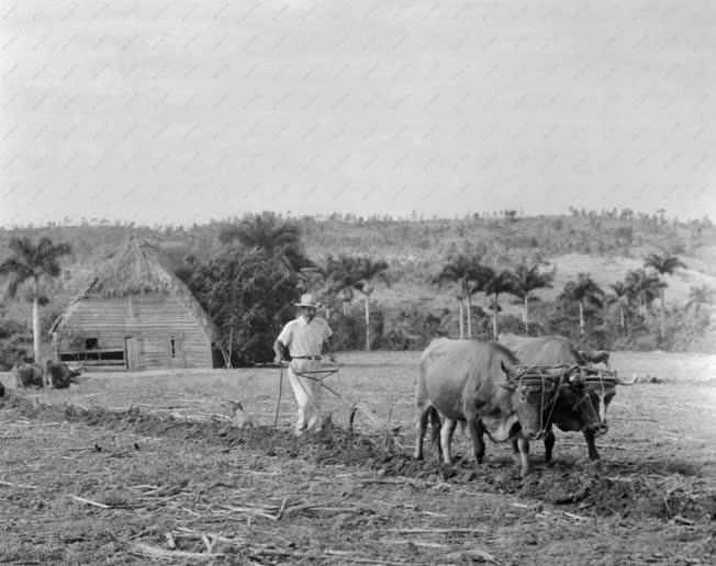Kuba - Mezőgazdaság