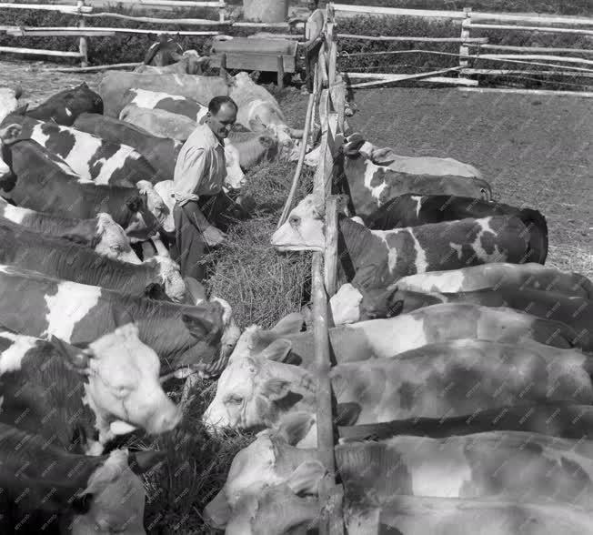 Mezőgazdaság - Két szocialista brigád alakult a Gerjeni Állami Gazdaságban