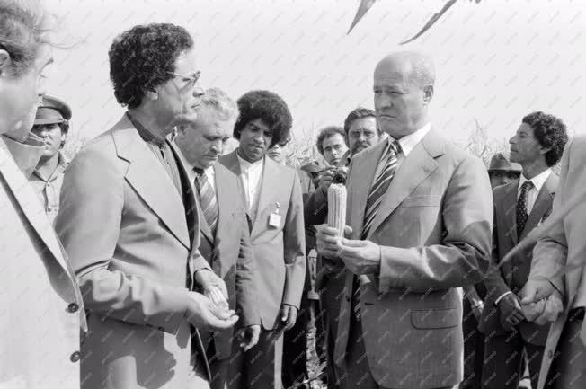Külkapcsolat - Kadhafi Magyarországon