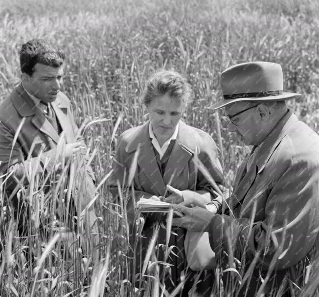 Mezőgazdaság - Gyógynövény Kutató Intézet budakalászi telepe