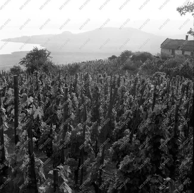 Balaton-felvidék - Györöki táj