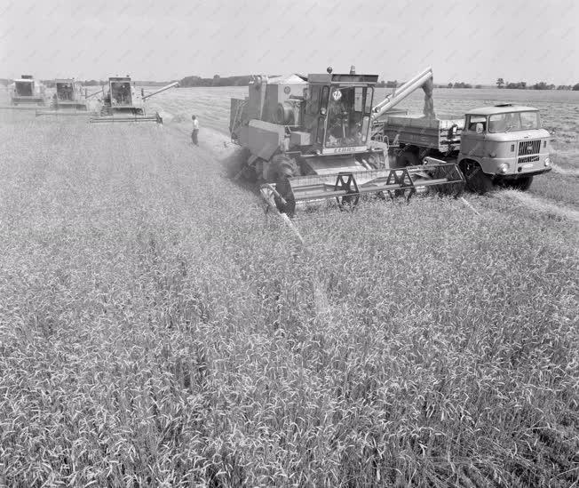 Mezőgazdaság - Aratnak Szabadegyházán