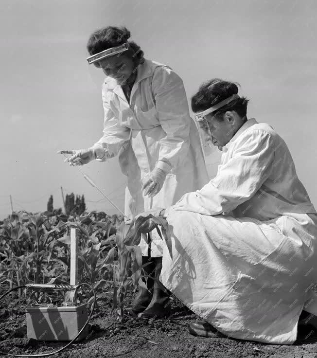 Mezőgazdaság - A szarvasi Öntözési és Rizstermesztési Kutató Intézetben