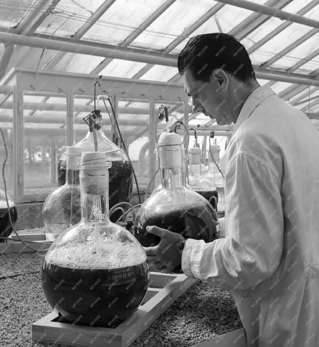 Tudomány - Algakutatás a Tihanyi Biológiai Kutató Intézetben
