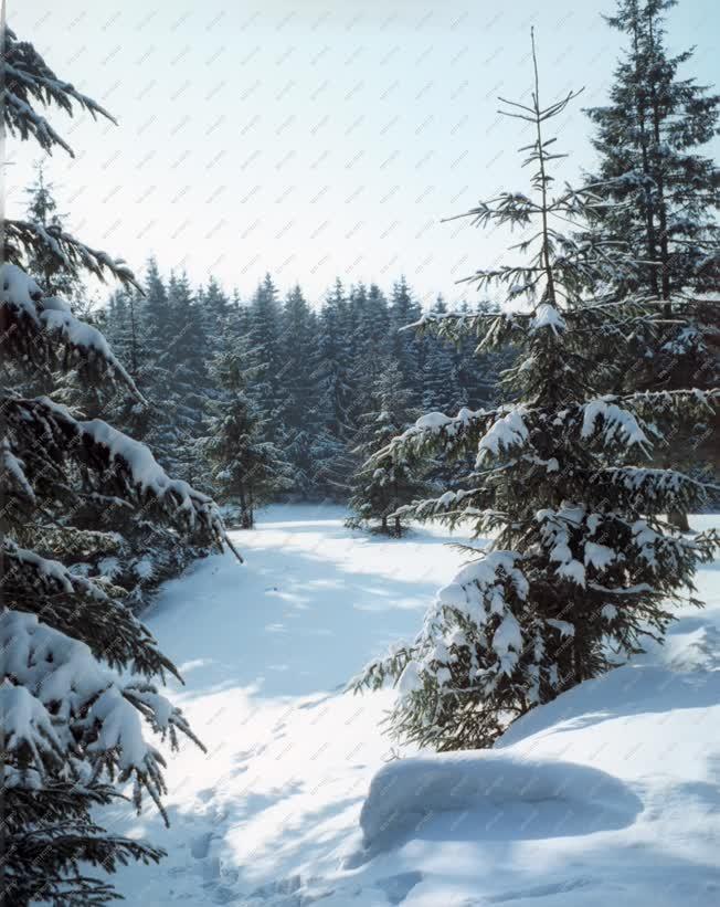 Természet - Havas bükki táj