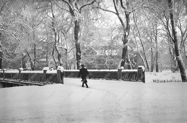 Természet - Életkép - Városkép - Tél Budapesten