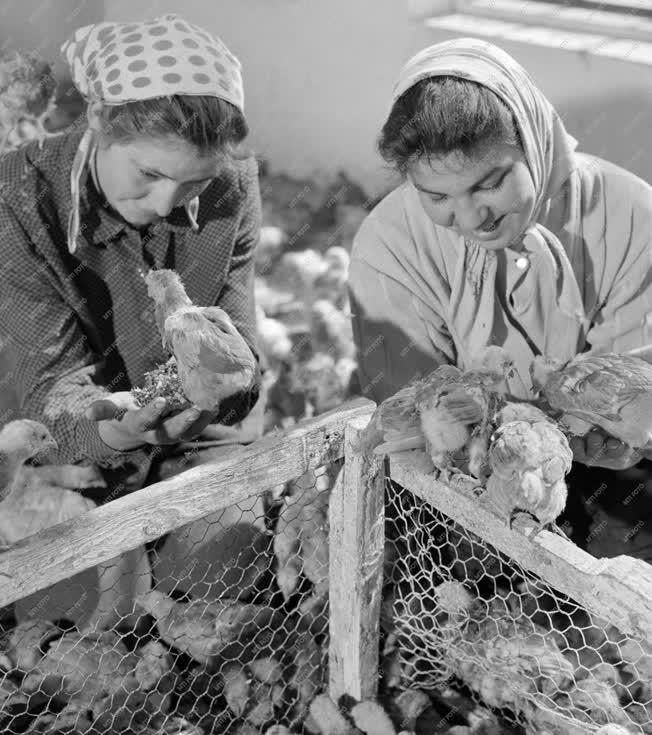 Mezőgazdaság - Fiatalok a kisújszállási Búzakalász Tsz-ben