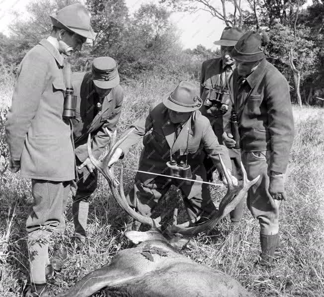 Szabadidő - Szarvasbika vadászat Valkón