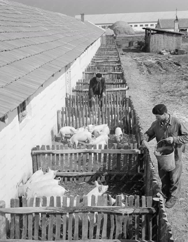 Mezőgazdaság - Jászboldogházai Aranykalász Tsz