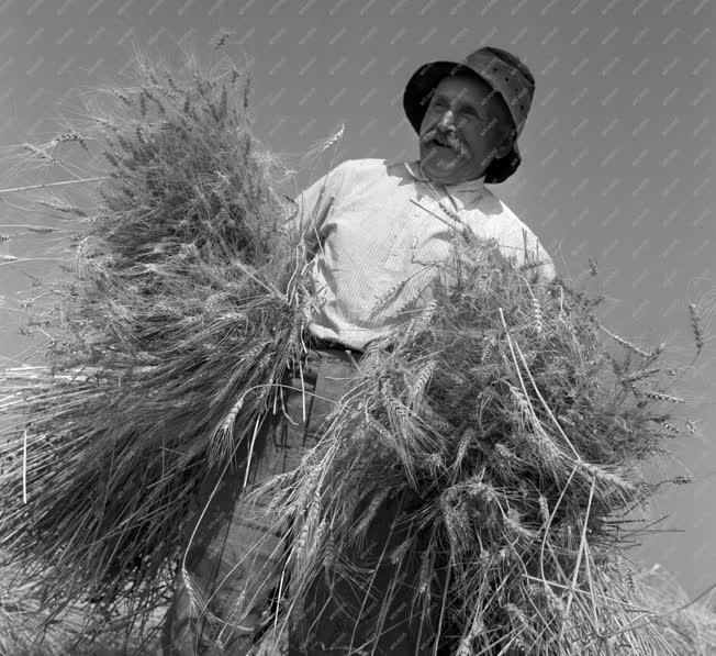 Mezőgazdaság - Aratás