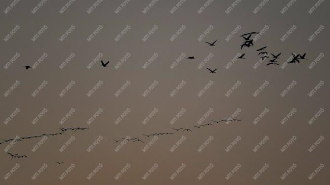 Állatvilág - Hortobágy - Őszi madárvonulás a Hortobágyon