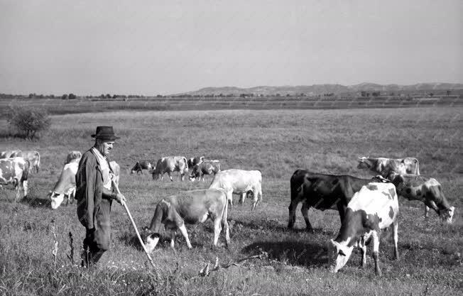 Mezőgazdaság - Legeltetés
