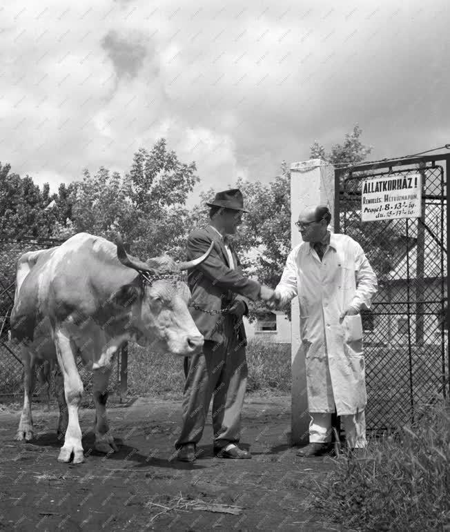 Állategészségügy - Kaposvári állatkórház