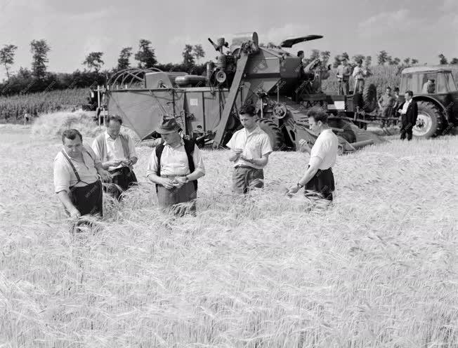 Mezőgazdaság - Aratják az őszi árpát a Monori Állami Gazdaságban