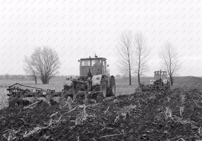 Mezőgazdaság - Tavaszi szántás