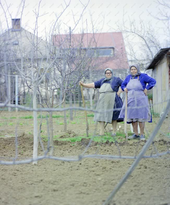 Mezőgazdaság - Életkép -  Háztáji kiskert Bonyhádon