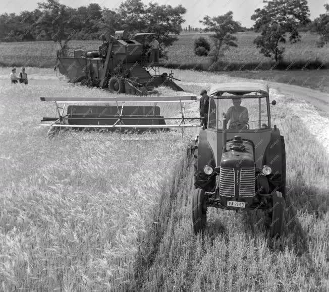 Mezőgazdaság - Monori Állami Gazdaság