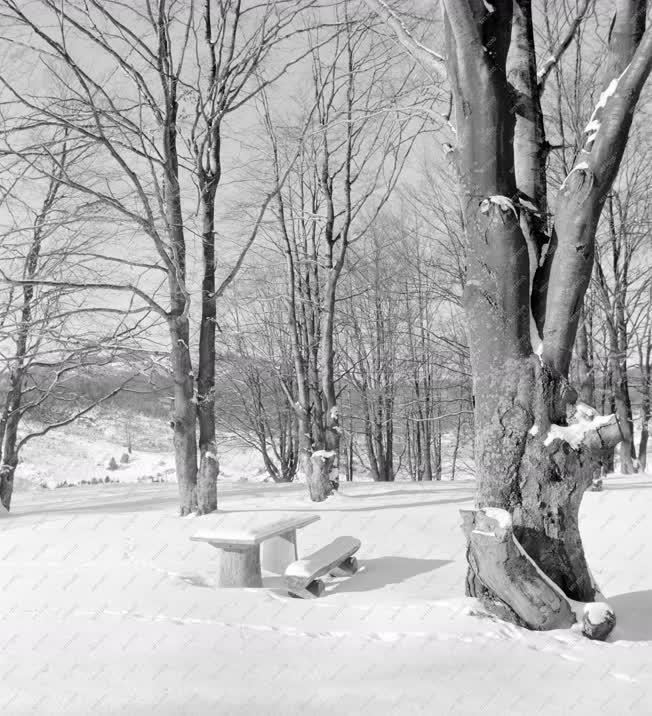 Természet - környezet - Tél a Bükkben