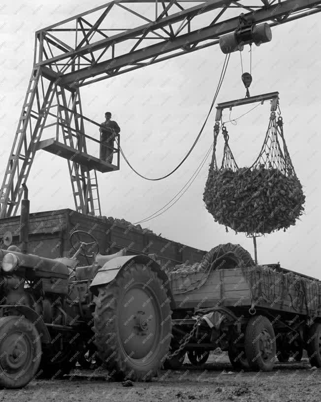Ipar - Szolnoki Cukorgyár - Cukorrépa szállítás