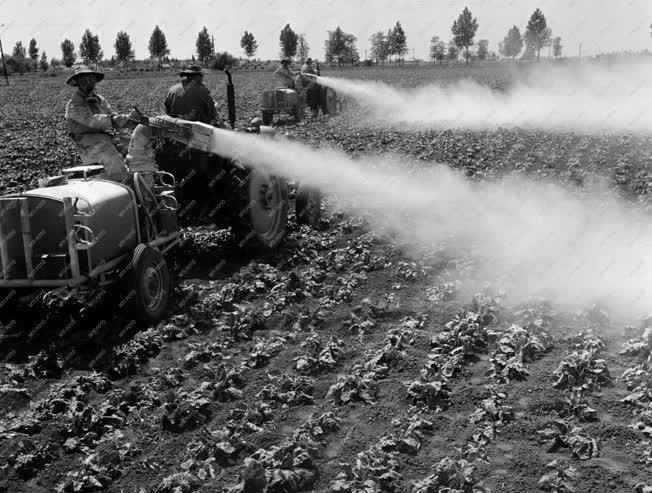 Mezőgazdaság - Növényvédelem Hajdú megyében