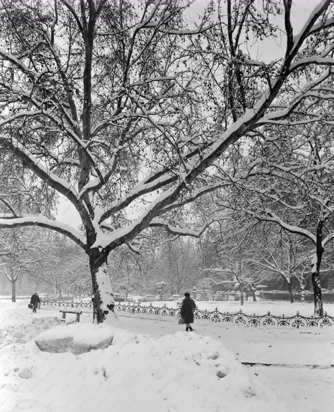 Városkép - Időjárás - Télen a Szabadság tér parkban